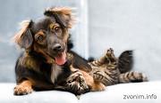 Предлагаю услуги-ветеринарная вызывная служба Динго Санкт-Петербург