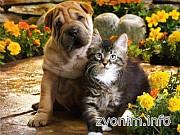 Предлагаю услуги-ветеринар к Вам на дом Санкт-Петербург
